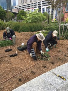 Gardening in First Ward Park.