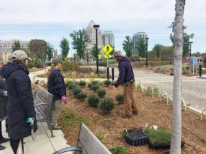 Volunteers planting flower beds