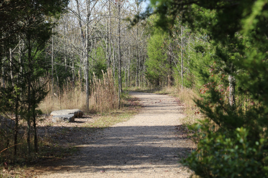 A path going through a nature preserve in the middle of winter.