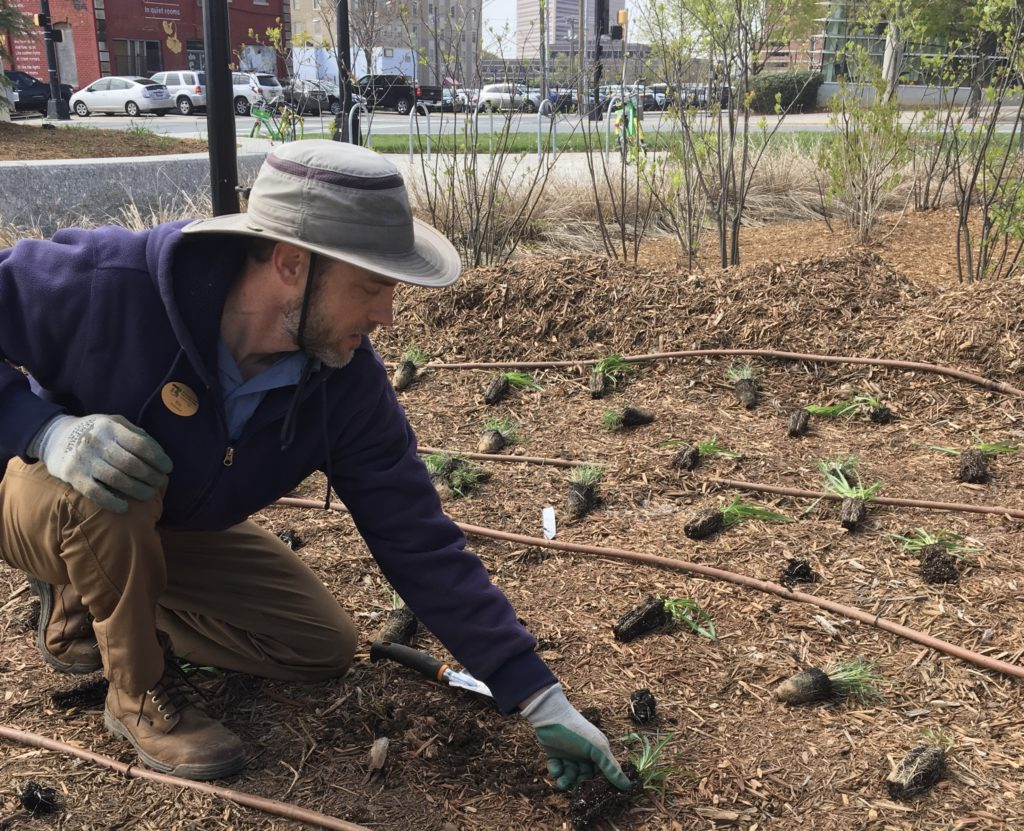 Mecklenburg County horticulturists planting in First Ward Park.